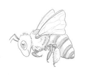 pencil bee 2